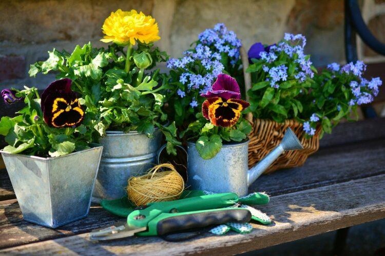 Blumen und Geräte bereit zur Gartenarbeit